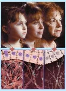 Vieillissement et altération de la peau à différents âges